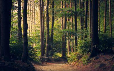 Dotace na hospodaření v lesích 2020